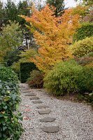 Noun : Kies-Weg mit Trittsteinen, Sinarundinaria (Bambus), Acer palmatum 'Sango Kaku' (Japanischer Fächerahorn), Cotoneaster horizontalis (Fächer - Zwergmispel) mit roten Beeren