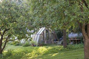 Gewächshaus zwischen Obstbäumen, Guellefass