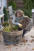 Frau wintert Sumpfpflanzen in Holzfass mit Herbstlaub ein