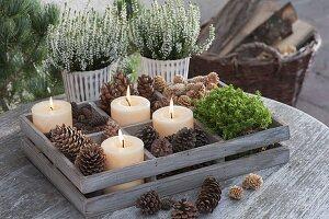 Holz-Kasten mit Zapfen von Picea (Fichte), Pinus (Kiefer), Larix (Lärche)