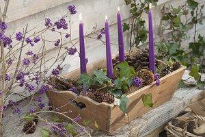Schneller Adventskranz in Holz-Kiste mit Hedera (Efeu) und Zapfen von Pinus