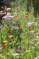 Bunte Blumenwiese aus einjaehrigen Sommerblumen