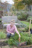 Frau erntet Karotten im Biogarten