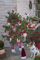 Rot - weiss geschmueckte Kiefer als lebender Weihnachtsbaum