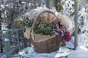 Winterlich bepflanzter Korb mit Ilex (Stechpalme), Heuchera
