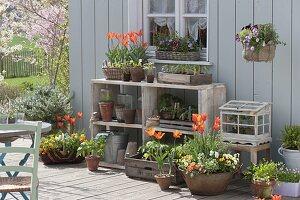 Fruehlingsterrasse mit Tulpen, Viola und Gemuesejungpflanzen