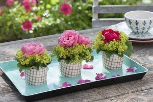Rosentoertchen : einzelne Blüten von Rosa (Rosen) mit Manschetten