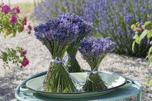 Stehstraeusse aus Lavendel (Lavandula) auf flacher Schale
