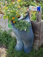 Urban Gardening Berlin