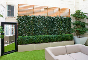 BASEMENT Garden Montague SQUARE, London, DESIGNED by AMIR SCHLEZINGER of MY LANDSCAPES: BASEMENT Garden with Trochodendron aralioides, Screen of HEDERA Woerner, MIRROR