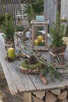 Ländliche Terrasse mit Picea glauca 'Conica' (Zuckerhutfichten)