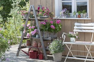 Balkonblumen auf Regal aus alter Holzleiter