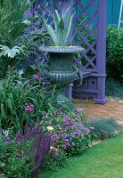 Blue FENCE, Mauve COVERED WOODEN SEAT, PEWTERED URNS PLANTED with Agave AMERICANA AND CARDOONS. THE NICHOLS Garden, READING