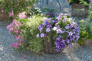 Korb mit Balkonblumen bepflanzen