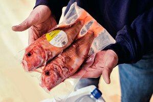 Fisch-Onlinehandel: Zwei verpackte Meerbarben