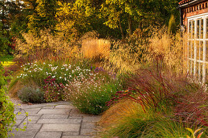 Gräser im Herbst-Garten Pennisetum 'Hameln', Stipa gigantea, Panicum virgatum 'Squaw'