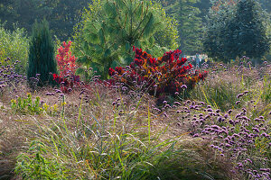 Herbst im Naturgarten Eisenkraut, Gäser, Gehölze in Herbstfärbung und Koniferen