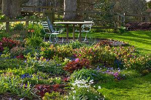 Sitzgruppe am Frühlings-Beet mit Lenzrosen (Helleborus orientalis), Frühlingsstern (Ipheion) und Pfingstrosen (Paeonia)