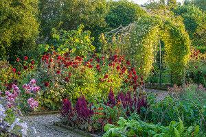 Garten mit Dahlien, Fuchsschwanz, Laubengang und Gemüse