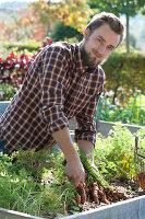 Möhren, Karotten im Hochbeet ernten