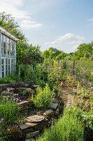 Kräuterspirale aus Naturstein und Gewächshaus aus alten Fenstern