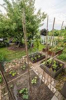 Gemüsegarten mit Hochbeeten, Apfelbaum und Gewächshaus