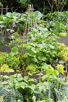 Gemüsegarten mit Gurken und Bohnen