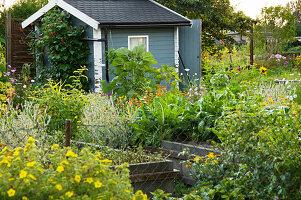 Gemüsegarten mit Hochbeeten und Gartenhaus