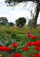 Blick vom Bauerngarten mit Mohnblumen auf Tisch in der Wiese