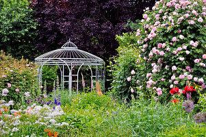 Englische Rose 'Constance Spry' und Pavillon