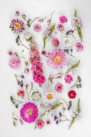 Blütentableau aus pinken und rosafarbenen Blüten