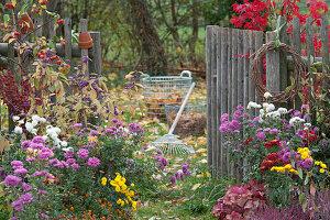 Herbstgarten mit Chrysanthemen, Liebesperlenstrauch, Zierapfel