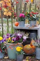 Herbst - Arrangement mit Stiefmütterchen, Hornveilchen und Knospenheide am Zaun
