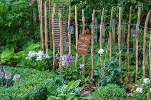 Staketenzaun im Beet mit Rose, Rittersporn, Phlox, Funkien und Buchsbaum