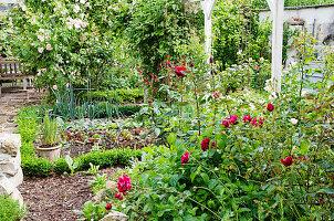 Gemüsebeet zwischen blühenden Rosen