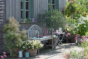 Sommerterrasse mit Perückenstrauch, Petunie Beautical 'French Vanilla', Olivenbaum, Stammrose und Strauchhortensie 'Annabelle'