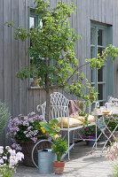 Terrasse mit Birnbaum, Korb mit Hängegeranie und Kürbispflanze, Sellerie im Tontopf und Bank mit Kissen