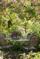 Sitzplatz auf schattiger Terrasse neben Borstenakazie