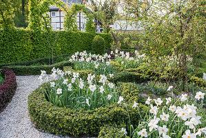 Knotengarten im Frühling mit Pfauenaugen-Narzissen