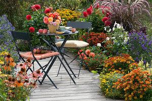 Beet mit Sonnenbraut, Zweizahn, Dahlien, Aster, Herbstanemone und Federborstengras am Holzdeck
