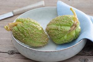 Chayote Frucht in Schale