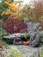 Liegestuhl am Herbstbeet mit Aster 'Calliope', Schneeball und Ahorn