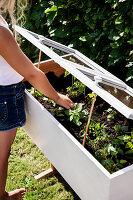 Mädchen kontrolliert die Jungpflanzen im DIY-Mini-Gewächshaus