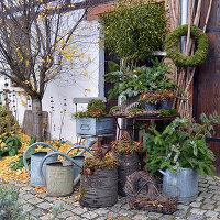 Herbstliches Arrangement mit Fichtenzweigen, Scheinbeeren, Moos und Zapfen