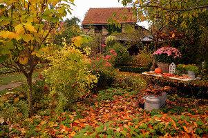 Ländlicher Garten mit buntem Herbstlaub
