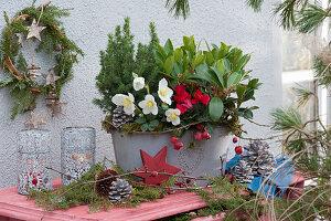 Jardiniere mit Christrose, Skimmie, Alpenveilchen und Zuckerhutfichte, Kranz, Stern, Zapfen, Zweige und Windlichter