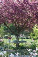 Baumbank unter Zierapfelbaum 'Paul Hauber'