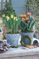 Tulpen 'Strong Gold' 'Orange Princess' in Zinktöpfen,  Steckzwiebeln und Kranz aus Kätzchenweide