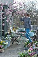 Frühlingsterrasse mit Pfirsichbaum, Primeln, Hornveilchen, Narzissen, Goldglöckchen, Tausendschön, Milchstern, Traubenhyazinthen und Sitzgruppe, Frau schnuppert an Pfirsichblüten