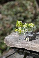 Kleine Frühlingsdekoration mit Buschwindröschen, Primeln und Wolfsmilch